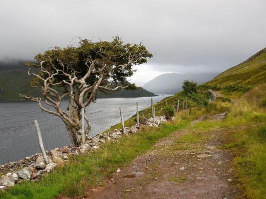 Killary Harbour ist Irlands einziger Fjord.