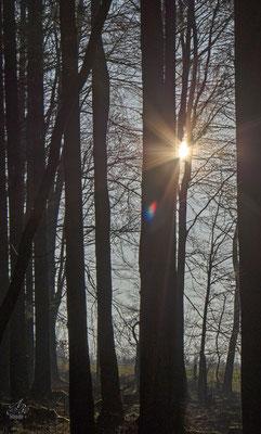Im Wald  -Februar15-