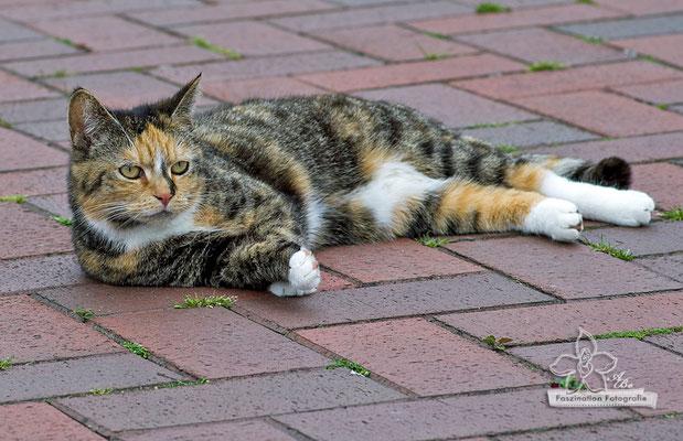 Katze  -Mai15-