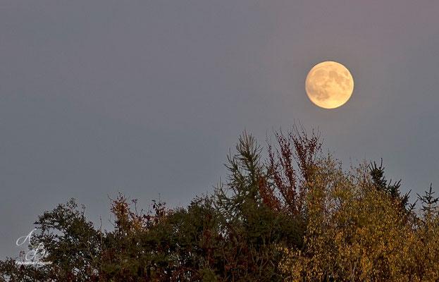 Herbst-Mond  -26.Okt.15-