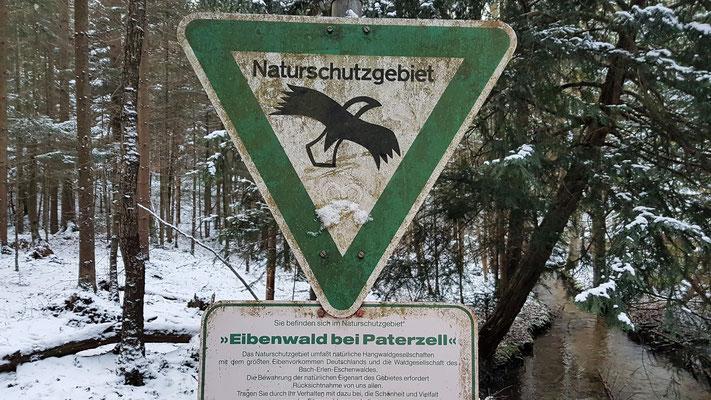Eibenwald in 10 Fußminuten erreichbar