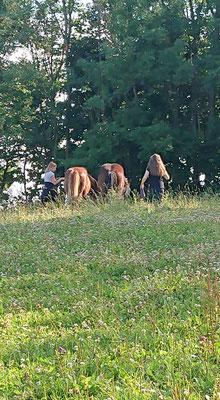 dags att hämta hästarna