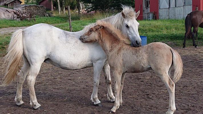 Tamlin med mamma Hetja