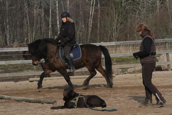 Ridning med fokus på balans hos både häst och ryttare