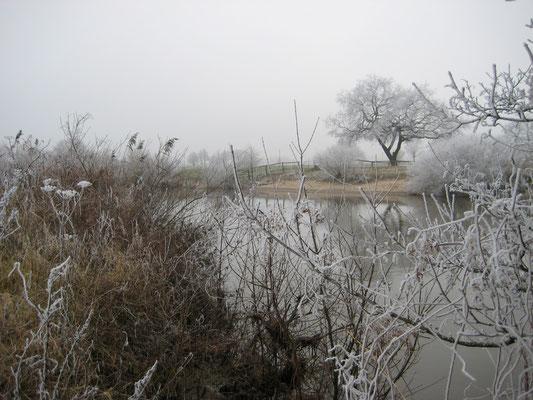 Ems südlich von Meppen