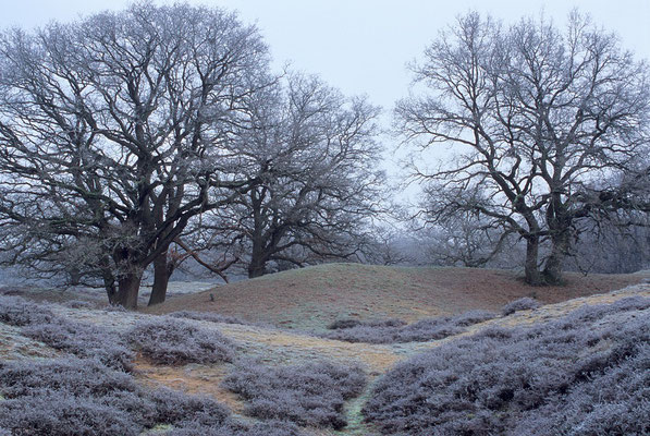 Winter im Borkener Paradies