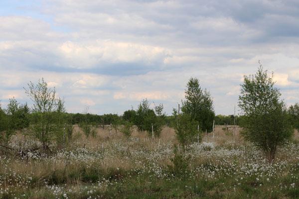 Im NSG Hahnenmoor