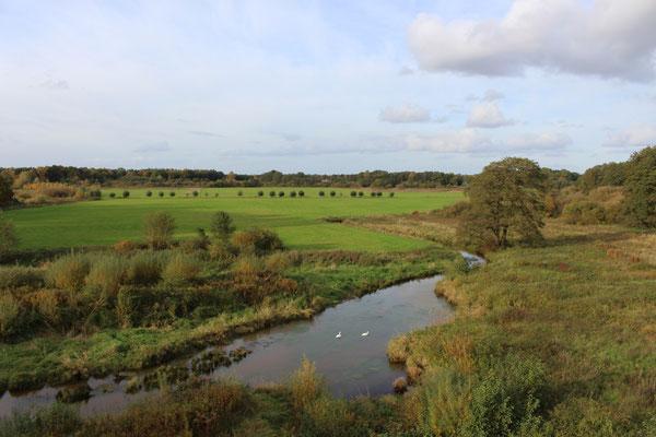 Große Flächen an der Hase wurden für den Naturschutz hergerichtet, wie hier bei Lahre