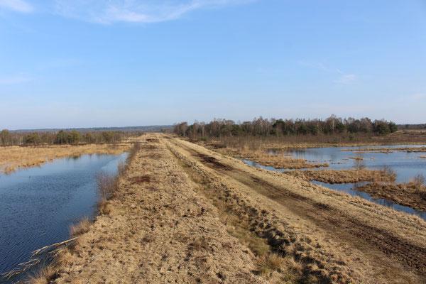 Auf unbefestigten Wegen kann das Moor erkundet werden
