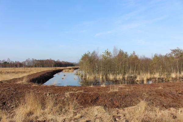 Verwallungen werden angelegt, um das Wasser im Moor zurückzustauen
