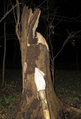 Davon betroffen war auch ein Fledermausquartier in der Nonne.