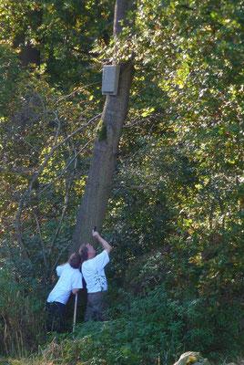 Inspektion am NABU-Fledermauskasten am Rande der Feuchtwiese. Er ist offenbar nicht mehr bewohnt.