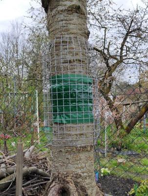 Eine Gittermanschette verhindert, dass Vögel an den Leimring geraten.