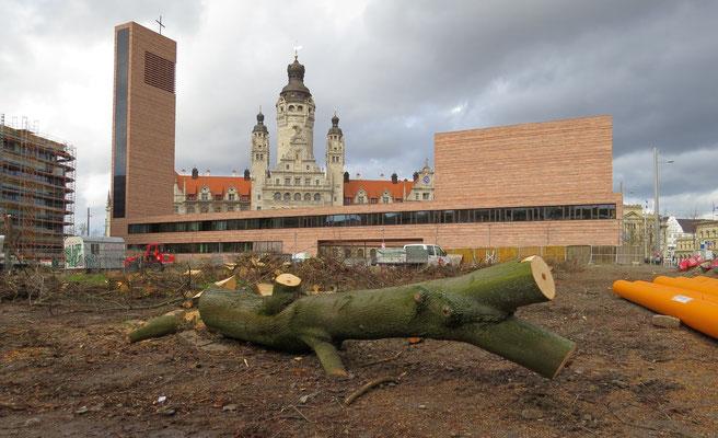 """Auch neben dem Leuschnerplatz wurden 30 alte Bäume gerodet, so wie <a href=""""https://www.NABU-Leipzig.de/Leipzig-schrumpft"""">an hunderten Stellen in der Stadt</a>. Deshalb können Tiere nicht auf andere Flächen ausweichen. Wohin denn?"""