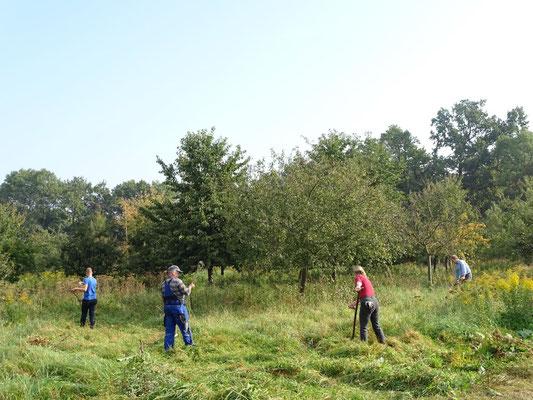 Arbeitseinsatz auf der Schmetterlingswiese. Foto: Beatrice Jeschke