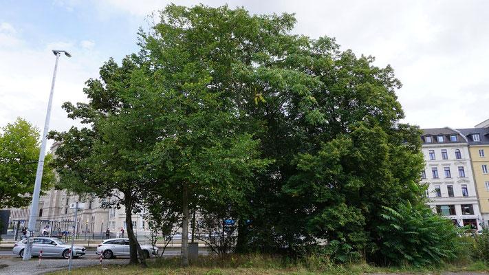 Die Anwohner in der Nachbarschaft berichten von ihren Sorgen. Sie möchten ihre alten Bäume im Quartier erhalten.