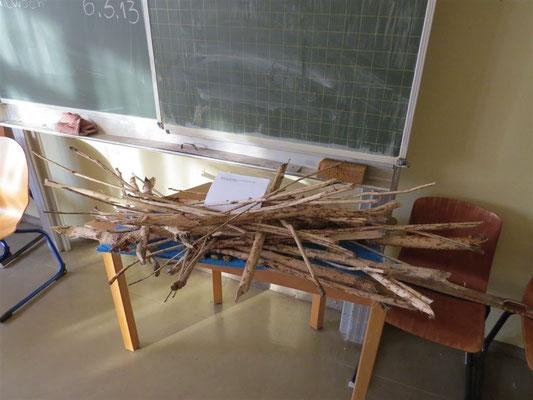 Aus der Mulde brachte ein Schüler Holz mit, an dem ein Biber Fraßspuren hinterlassen hatte.