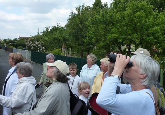 """Gartenfreunde beobachten die Vögel in der Gartenanlage """"Nordostvorstadt""""."""