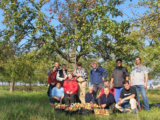Fleißige Helfer bei der Apfelernte auf einer Streuobstwiese.</p>Foto: Ina Ebert