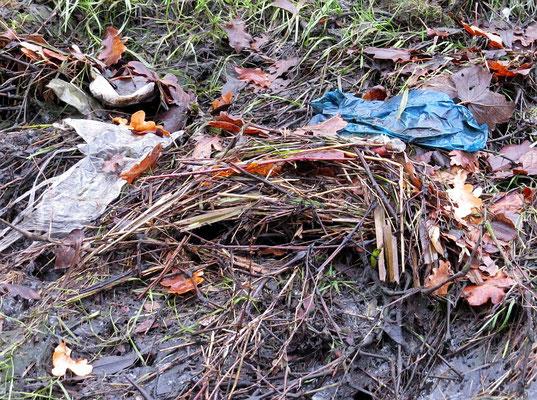 Abfall im Laichgewässer kann den Fortpflanzungserfolg deutlich verringern.