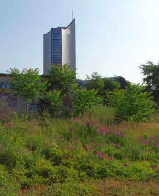 Wilde Wiesen auf dem Wilhelm-Leuschner-Platz bieten für viele Tiere Nahrung und Unterschlupf, darunter Wildbienen, Hummeln, Käfer, Schmetterlinge und sogar Libellen.