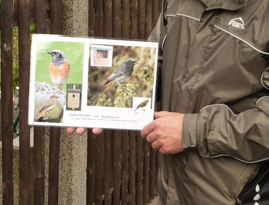 Der Gartenrotschwanz ist Vogel des Jahres 2011. Wie erkennt man ihn und wie unterscheidet er sich vom Hausrotschwanz? NABU-Vogelexperte Karsten Peterlein erklärt die Bestimmungsmerkmale.