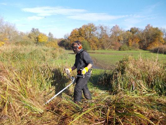 Und weiter gehts. Mehrere Arbeitstage sind nötig, um die gesamte Wiesenfläche zu mähen.