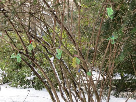 In einem einzelnen Baum im Clara-Zetkin-Park entdeckte die Schülergruppe 50 leere Netze.