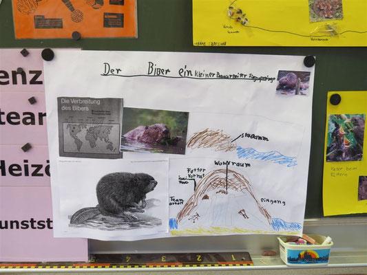 Ein Schüler war besonders fasziniert von den Bauwerken der Biber.