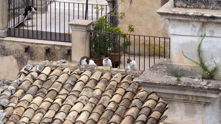 Petits chats siciliens sur les toits
