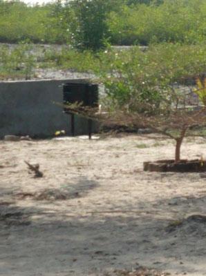 Umweltschutz, Abfallkübel auf dem Schulhausareal