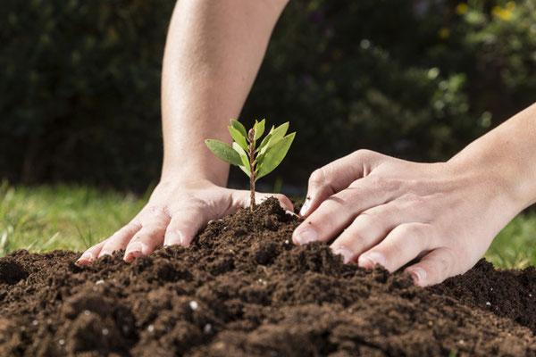 Bepflanzung_Pflanzen_Garten