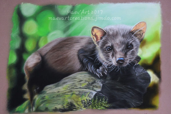Martre des pins - D'après une photo du parc animalier de Sainte Croix, avec son autorisation