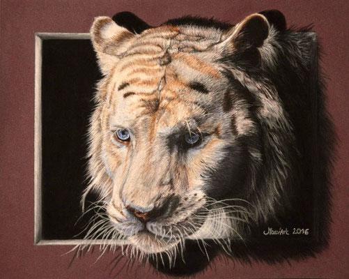 """Tigre blanc, dans la série : """"Sortir des cadres"""" - D'après une photo de """"Celem"""" sur Deviantart, avec son autorisation."""