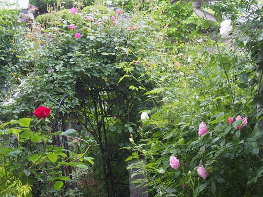 中庭のアーチ(ジャングル状?)