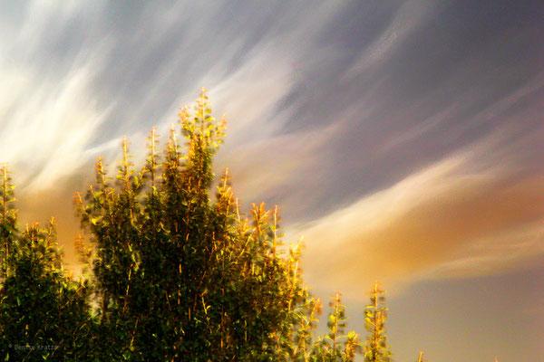 hidden:sky - Fotografie