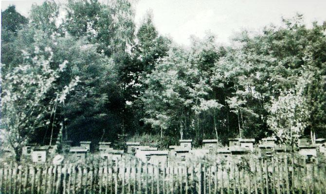 Pasieka w Rajskiem, 1945