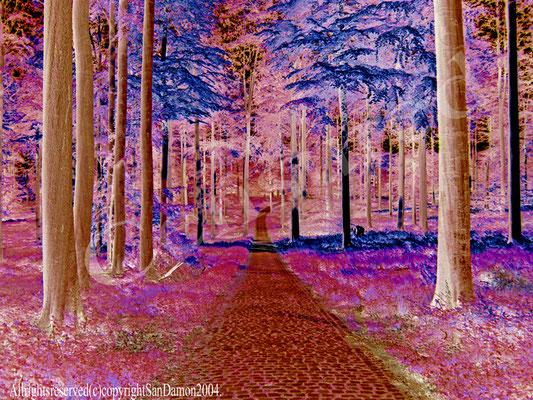"Chemin d'Oniroscopie                Chemin menant au fameux fleuve ""la Gida"""