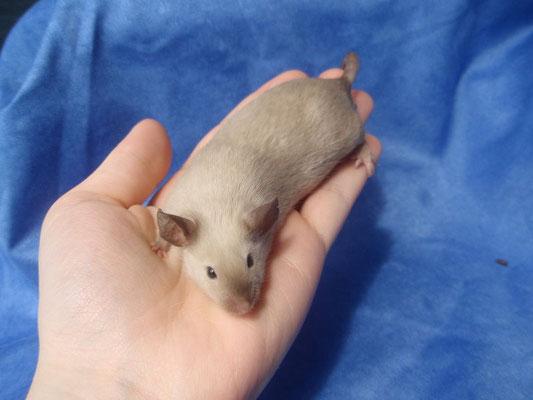 CPB - Danke für das Bild an gesunde-kleintierzucht.jimdo.com!