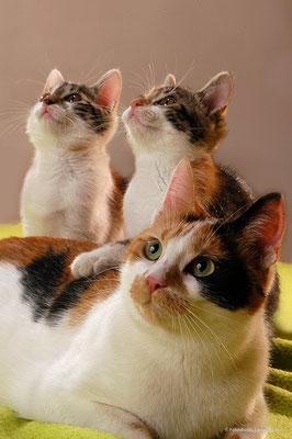 Thüringen Suhl , Katze mit 2 baby's , Fothaus Lange ,
