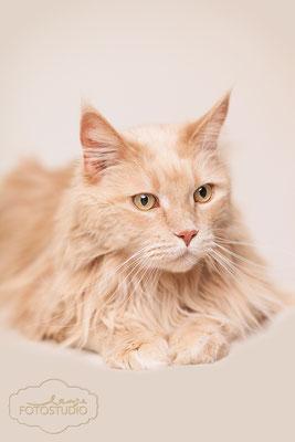 süße katze , Fotohaus Lange ,Tier , Thüringen Suhl