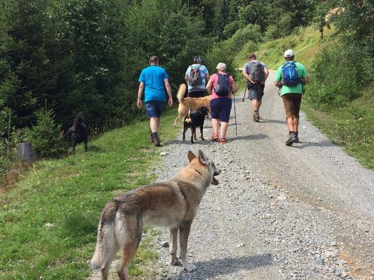 Tagestour auf die Forsthofalm in Hinterglemm August 2017