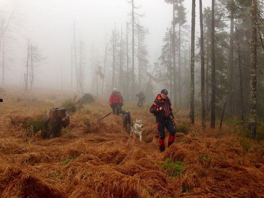 Durch den nebligen Böhmerwald im Oktober 2013