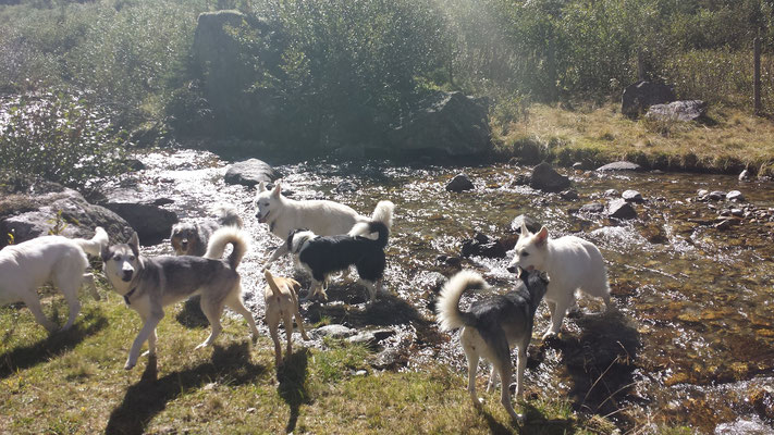 Am Wasser entlang im Pinzgau