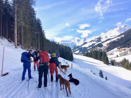 Langlauftour mit Hund