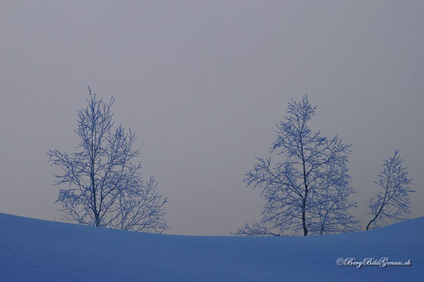 Arktisch..