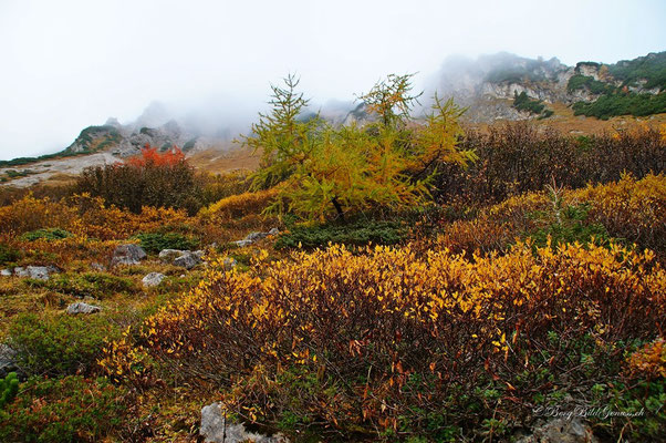 Herbstfarben..