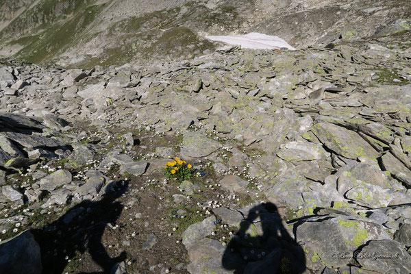 Alpiner Blumengarten