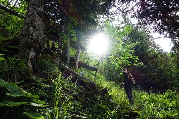 Lauschige Waldwege..