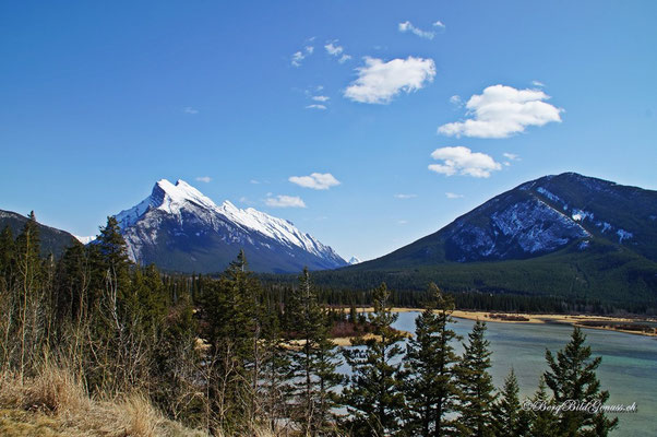 Bald in Banff